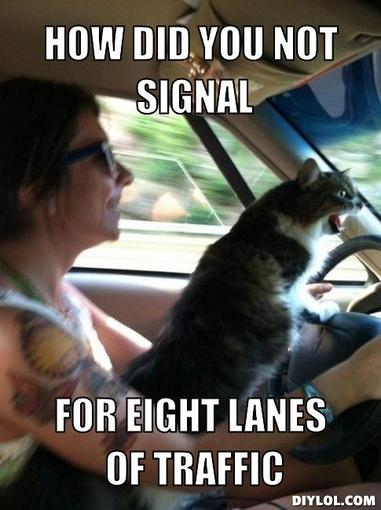 Road Rage Cat 1